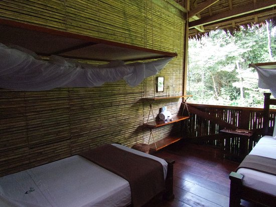 Tambopata Research Center: My Room looking towards the jungle