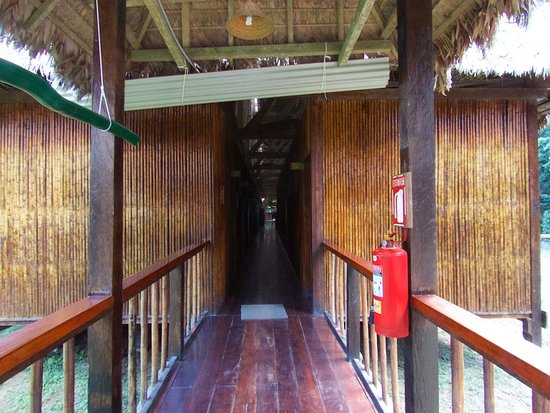 Tambopata Research Center: One of the walkways, this between the Rooms and the shared Baths