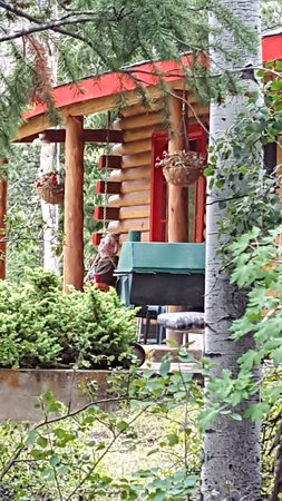 Pleasant View Resort: Looking at front porch from aspen grove