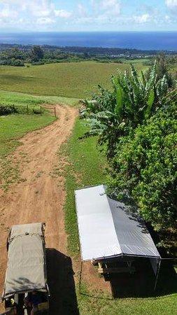 Hawi, Havaí: View from the final tree rapel