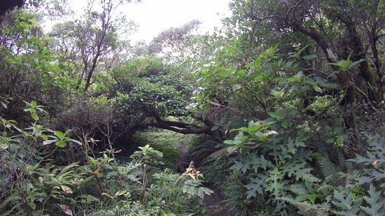 Hachijo-jima, Japão: 浅間神社へ向う道