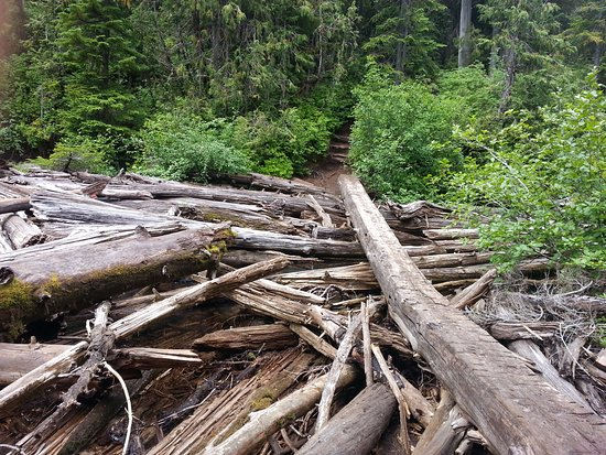 Snow Lake Trail: a path to wilderness campsite at Snow Lake
