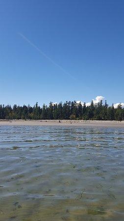 กูร์เตอเนย์, แคนาดา: A view back to the beach from the water