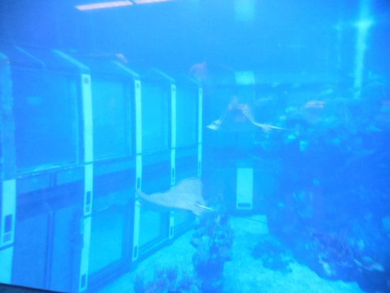 The Epcot Seas Aqua Tour: The Tank from the Viewing Window