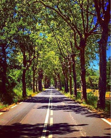 Avene, Frankreich: photo3.jpg