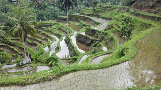 Bali Padma Tour