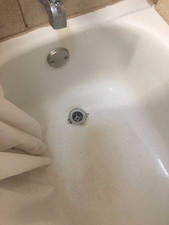 Holiday Inn Corpus Christi - N. Padre Island: stained tub