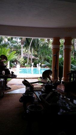 African House Resort : La piscina