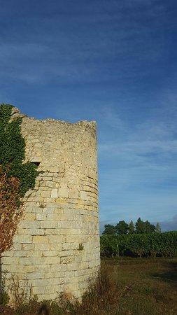 Saint-Christoly-Medoc, Frankrig: 20160818_082402_large.jpg