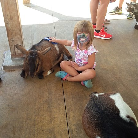Brookfield, IL: Petting Zoo