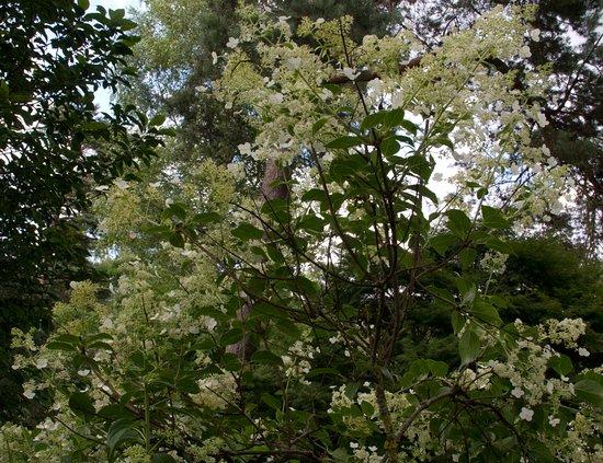 Saint Die des Vosges, فرنسا: arbuste