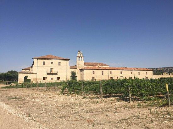 Sardon de Duero, สเปน: Increíble estancia para dejarse llevar y pensar solo en estar bien. Paseos entre viñedos, vayas,
