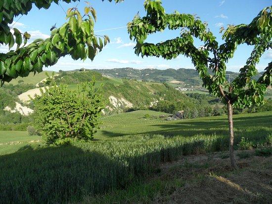 Montelparo, Italy: Looking towards the farmhouse
