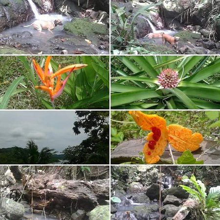 Puerto Lindo, Panama: Nature  around the House