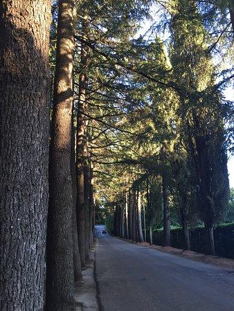 Bassano Romano, Italia: photo8.jpg