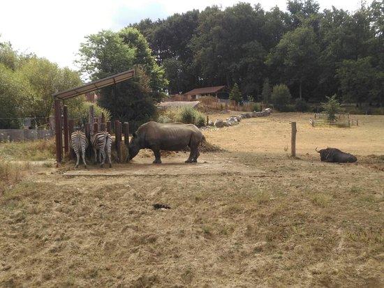 Afbeeldingsresultaat voor parc zoo du reynou