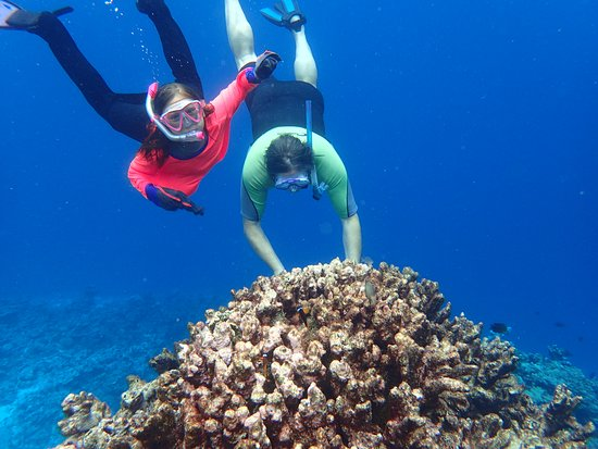 Hakau Adventures Day Cruises : Snorkelling lessons with the kids were a dream. Thanks Don!