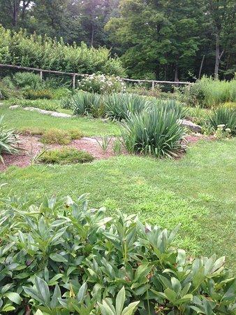 Wilton, CT: The Secret Garden in August