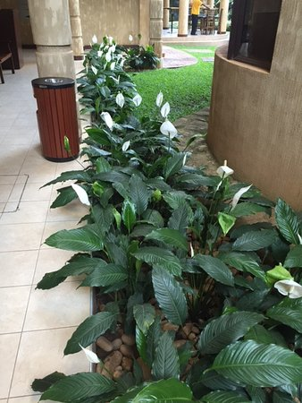 Protea Hotel Kampala Photo