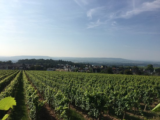 Geisenheim, Germany: photo2.jpg