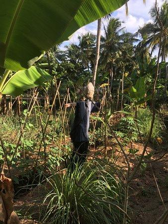 The Wallawwa: Hotel's own veg and fruit farm