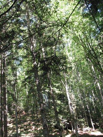 La Verna, Italie: Foresta di conifere nei pressi del santuario francescano