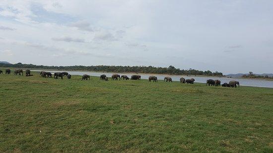 Habarana, Sri Lanka: Part of the main herd