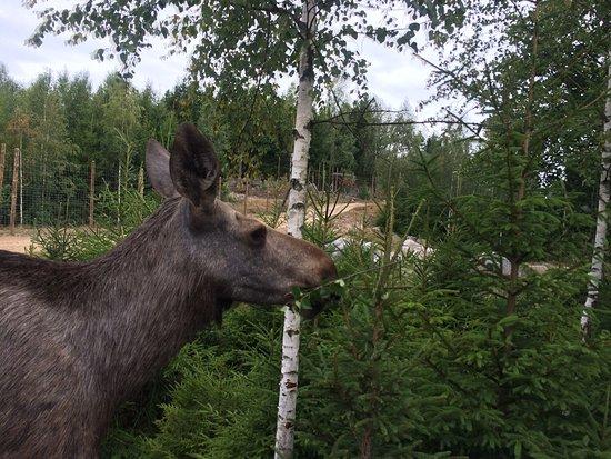 Nybro, Suecia: photo0.jpg