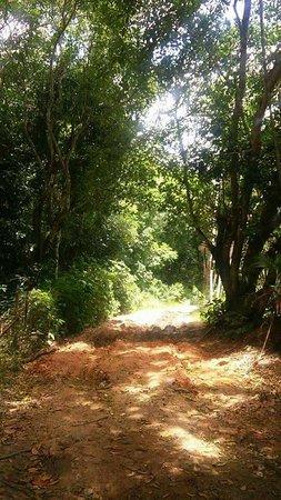 Boca da Mata, AL: Lugar belíssimo, onde se pode fazer excursão, nadar, andar a cavalo e saborear as frutas das árv