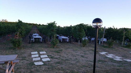 Pianoro, Ιταλία: Cena nella vigna