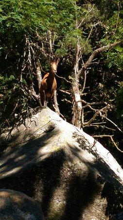 Les Angles, ฝรั่งเศส: Parc animalier des Angles