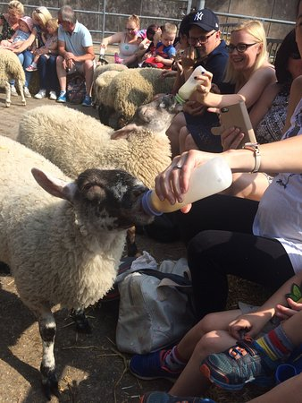 Bolton, UK: Smithills Open Farm