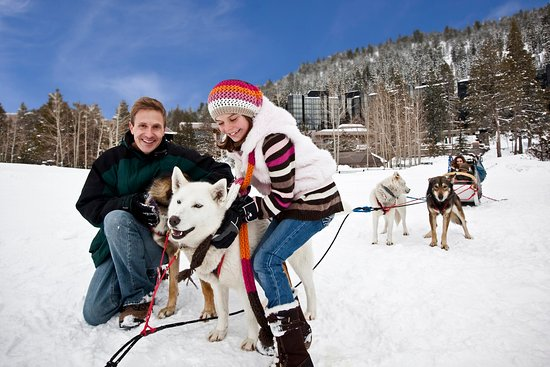 Olympic Valley, Kalifornien: Resort at Squaw Creek_Recreation_Dog Sledding