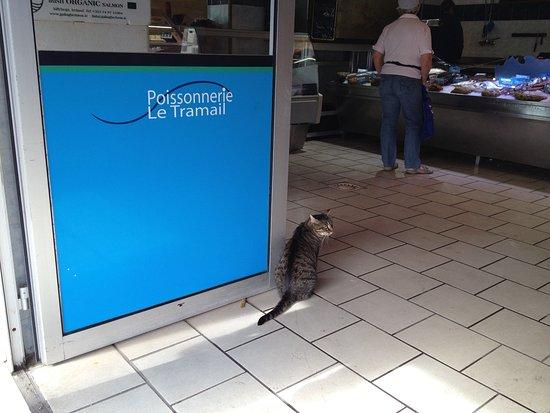 Selbst Katzen stehen hier an.