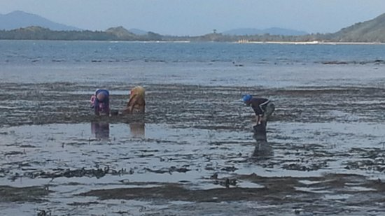 Foto de Desa Sekotong Barat