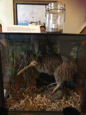 Devonport, Nueva Zelanda: photo1.jpg