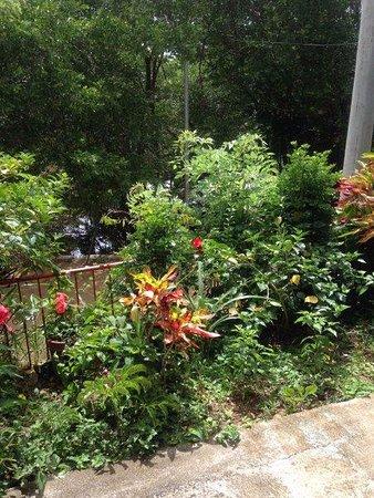 Spanish Ya : Gardennext to the classroom