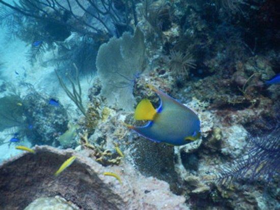 Long Caye, Belice: Diving