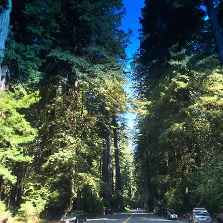 Orick, Califórnia: Driving down the Newton P Drury Scenic Parkway