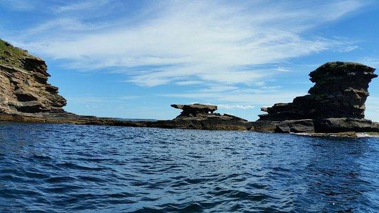 Donelda's Puffin Boat Tours