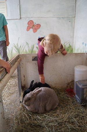 Parksville, Canadá: There are rabbits kids can pet.