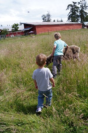 Parksville, Canadá: A field with sheep and goats the kids can visit.