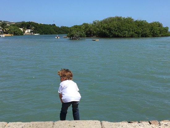 Penuelas, Puerto Rico: Mero relleno de todos los mariscos!! (Langosta, camaron, pulpo, concha) y ensalada 7 potencias!!