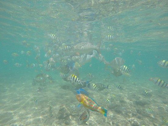 Poipu Beach Park: Snorkeling at Poipu