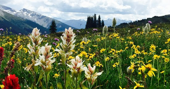 Purcell Mountain Lodge: Biggest alpine meadow in North America