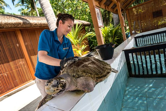 Four Seasons Resort Maldives at Landaa Giraavaru: Turtle Rehabilitation Programme