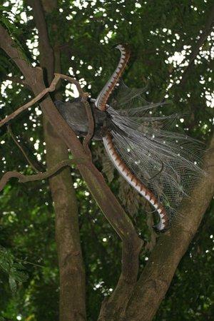 Healesville, Australia: Lyre Bird