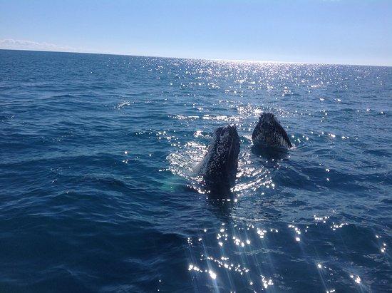 Hervey Bay, Australia: One of many
