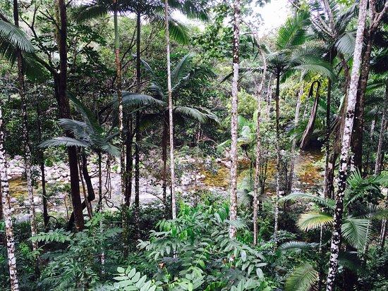 Mossman, Australia: photo6.jpg