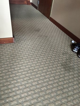 Suites at Silver Tree: Carpet stains
